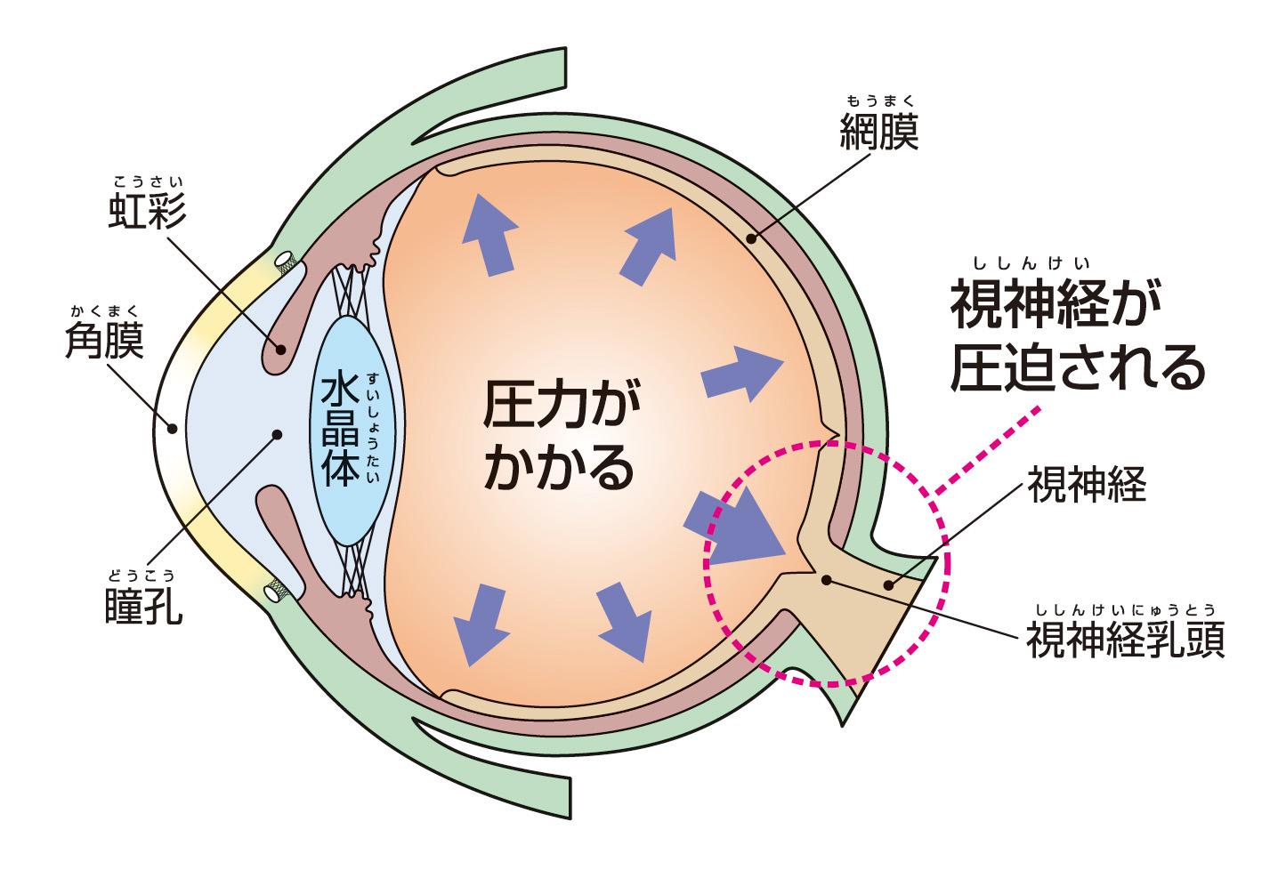 再生 視神経